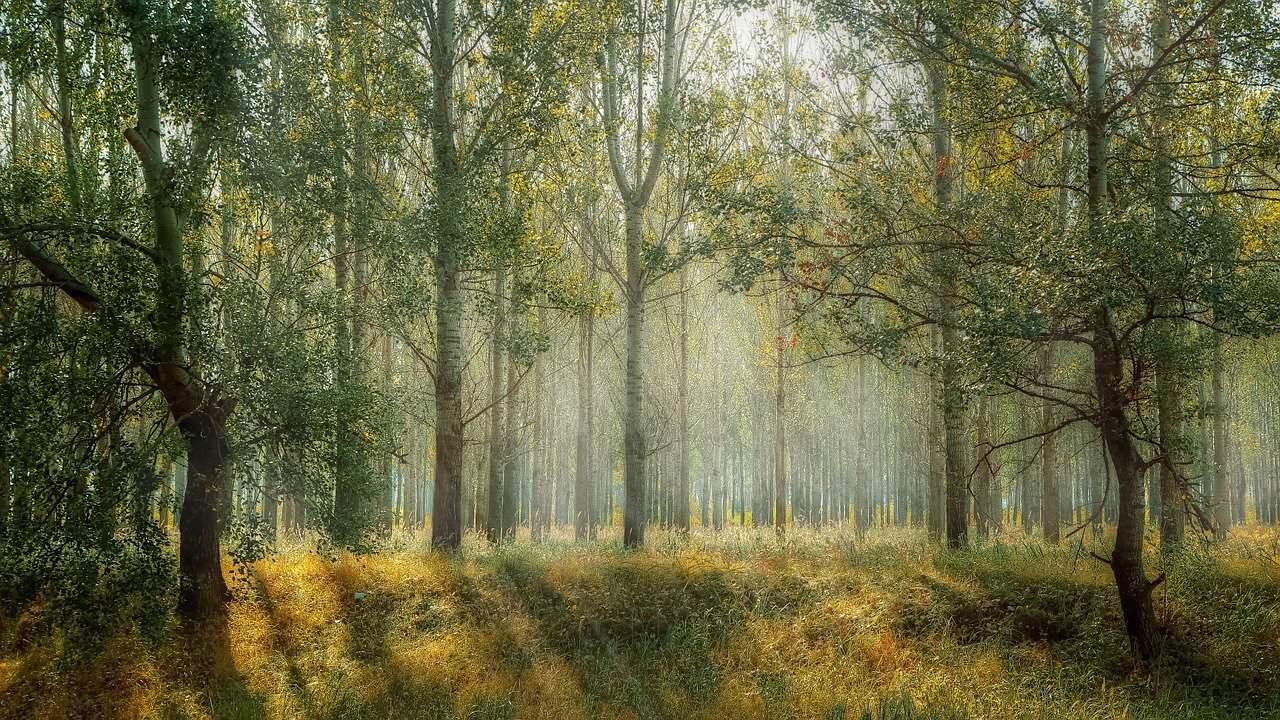 random-forest-bosque-aleatorio